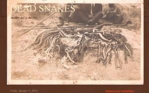 Dead Snakes 1